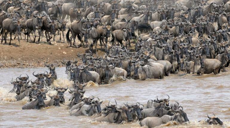 safari-in-tanzania-northern-serengeti_02