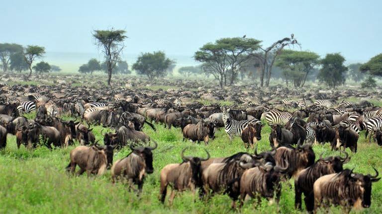 safari-in-tanzania-northern-serengeti_03