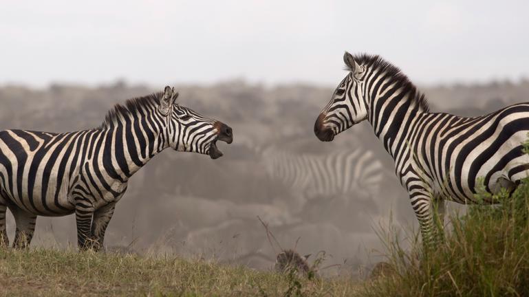 safari-in-tanzania-northern-serengeti_04