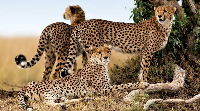 safari-in-tanzania-northern-serengeti_06