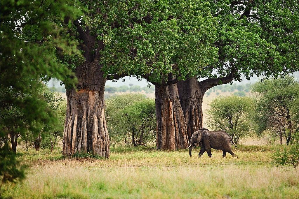 safari-in-tanzania-tarangire-national-park_01