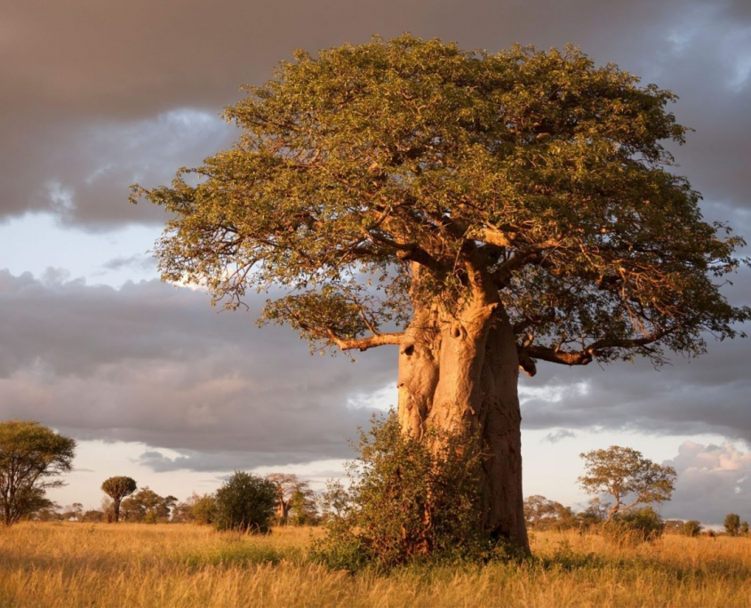 safari-in-tanzania-tarangire-national-park_02