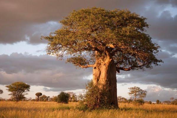 Tanzania: 6 dagen Adventure Safari