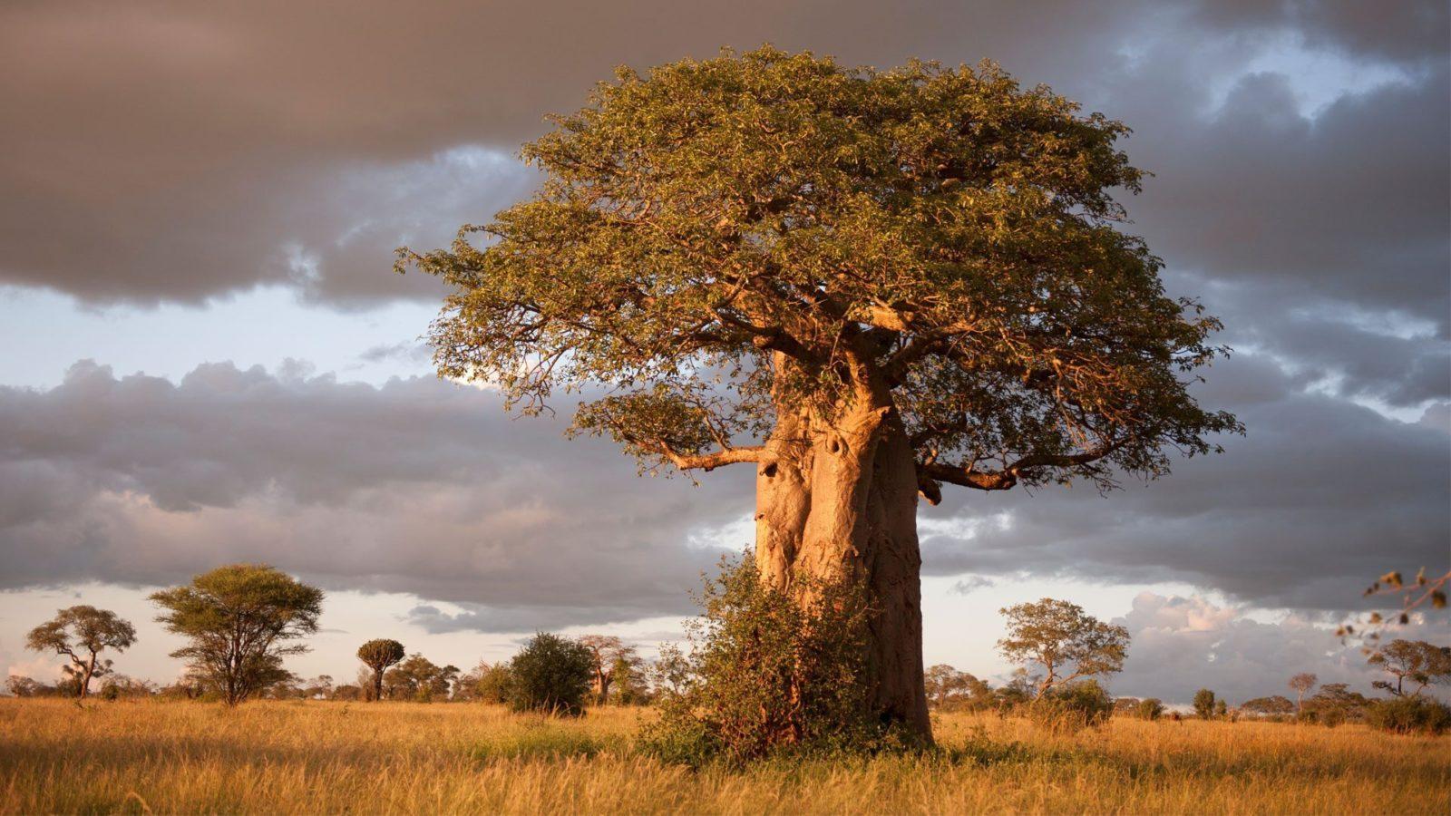 Tanzania: 6 dagen Adventure Safari (P6)