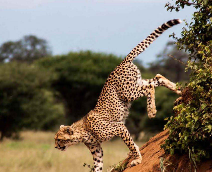 safari-in-tanzania-tarangire-national-park_03