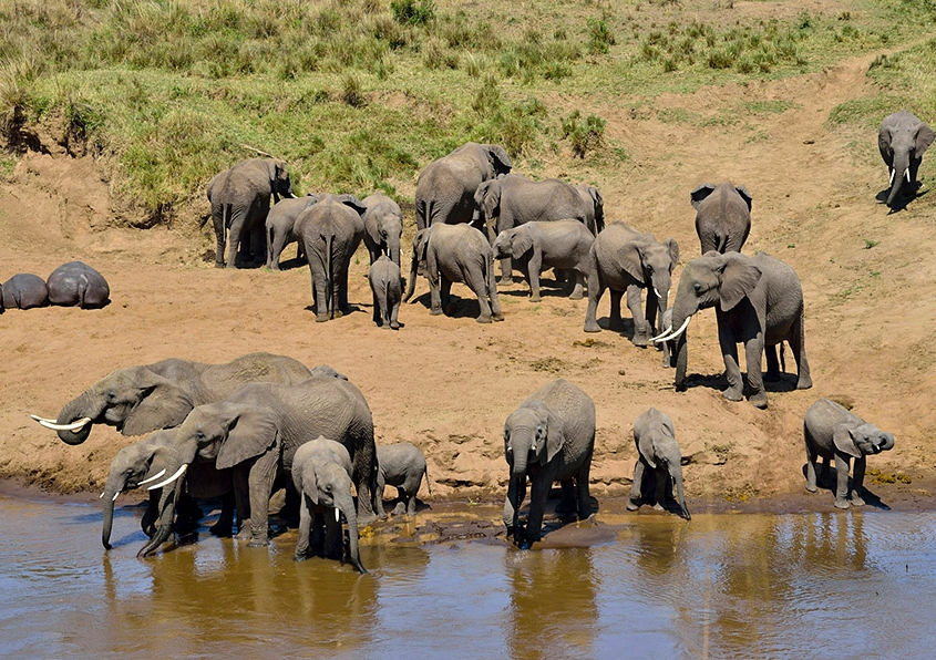 safari-in-tanzania-tarangire-national-park_04
