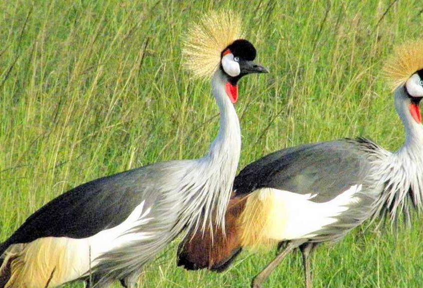safari-in-tanzania-tarangire-national-park_08