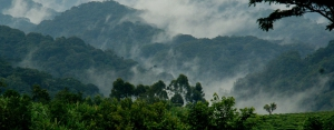 safari-in-uganda-bwindi-impenetrable-forest_04