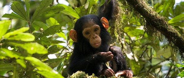 safari-in-uganda-kibale-forest-national-park_01