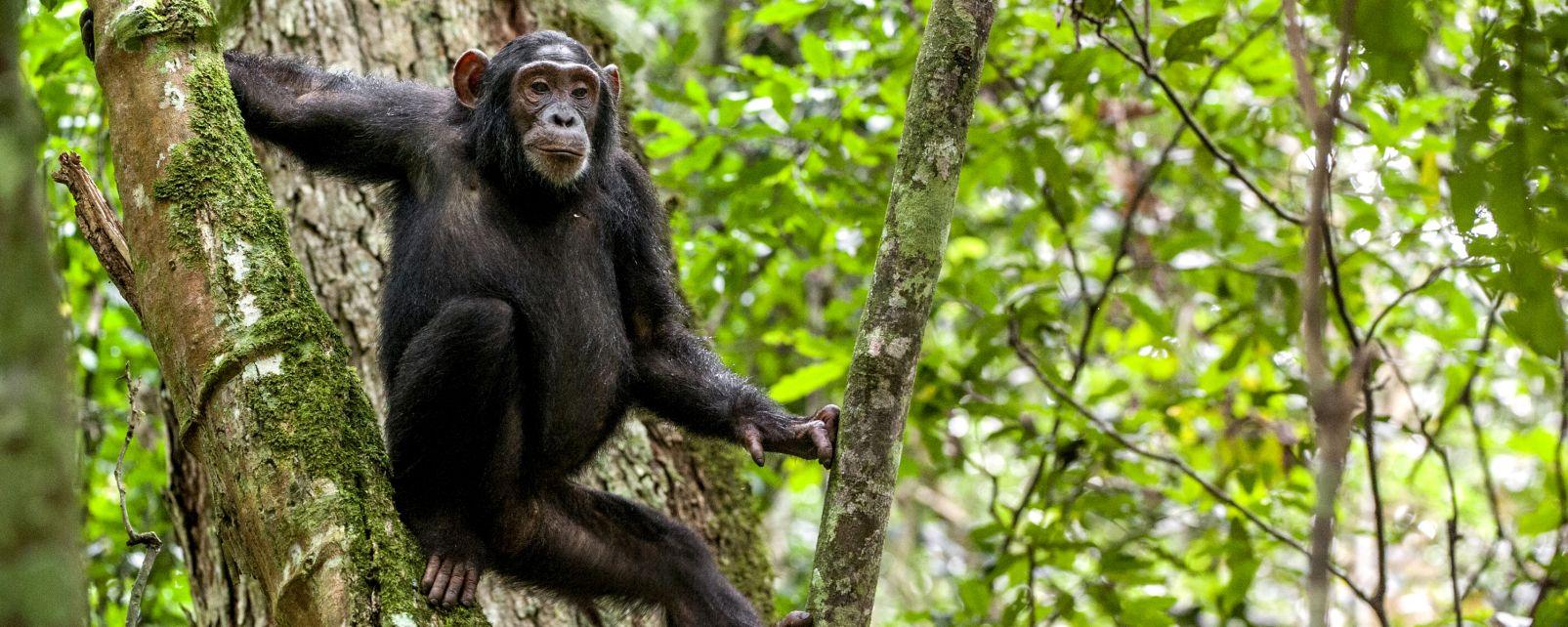 safari-in-uganda-kibale-forest-national-park_02