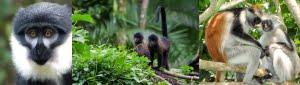 safari-in-uganda-kibale-forest-national-park_05