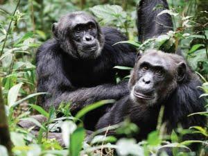 safari-in-uganda-kibale-forest-national-park_06