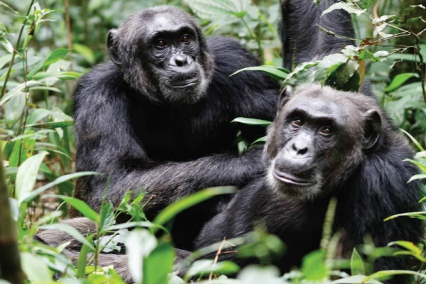 Uganda – 8 Dagen Hoogtepunten van Uganda met Gorilla & Chimpanzee Trekking