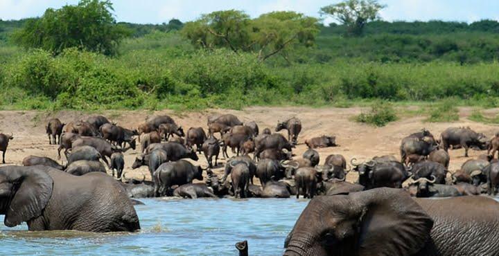 safari-in-uganda-queen-elizabeth-national-park_01