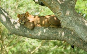 safari-in-uganda-queen-elizabeth-national-park_02