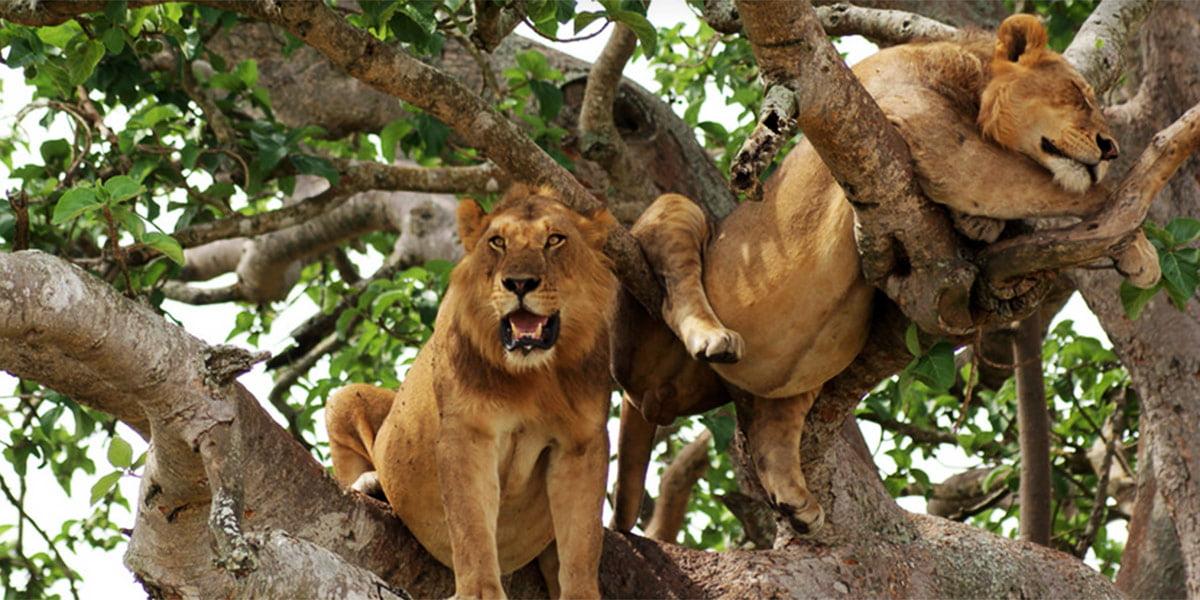 safari-in-uganda-queen-elizabeth-national-park_06