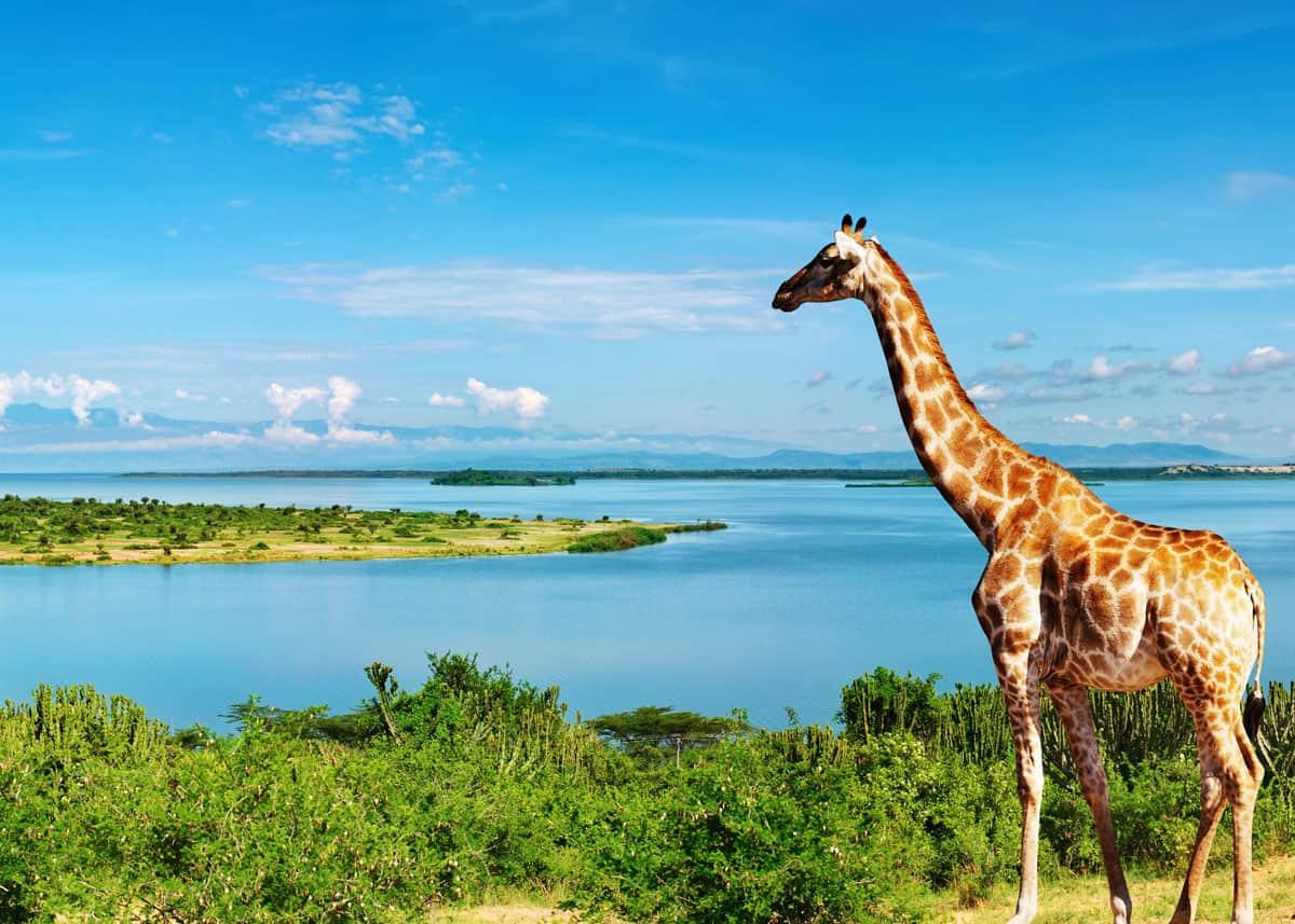 safari-in-uganda_02