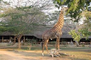Satao camp @Tsavo East – Kenia