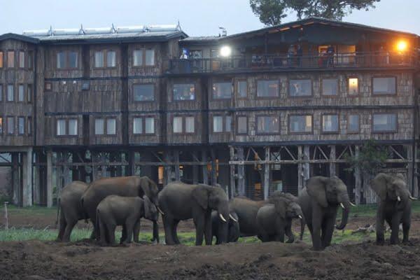 Treetops Lodge @Aberdares National Park – Kenia