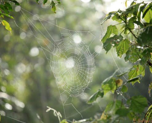 spider-web-remote-western-uganda
