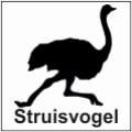 safari-in-kenia-struisvogel