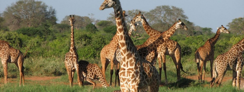 tsavo-east-en-west_02