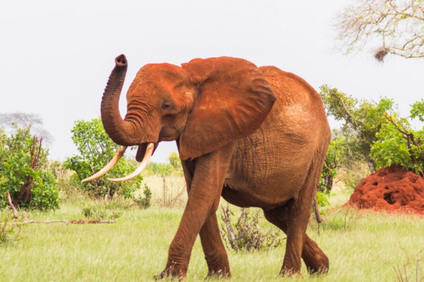 "Kenia: 4 dagen Tsavo ""Secret"" Safari (M13)"