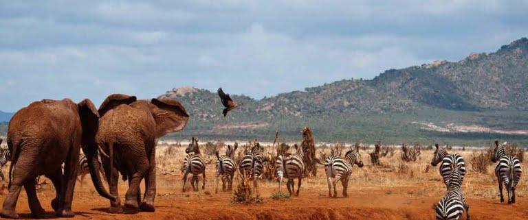 Keniaanse aansluiting pagina