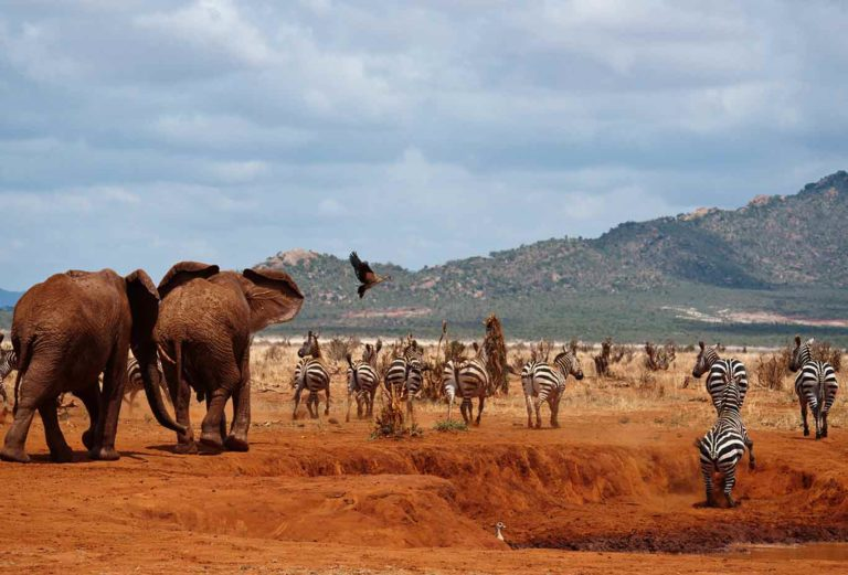 Kenia: 2 dagen Safari Tsavo East & Tsavo West (M3)