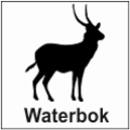 safari-in-kenia-waterbok