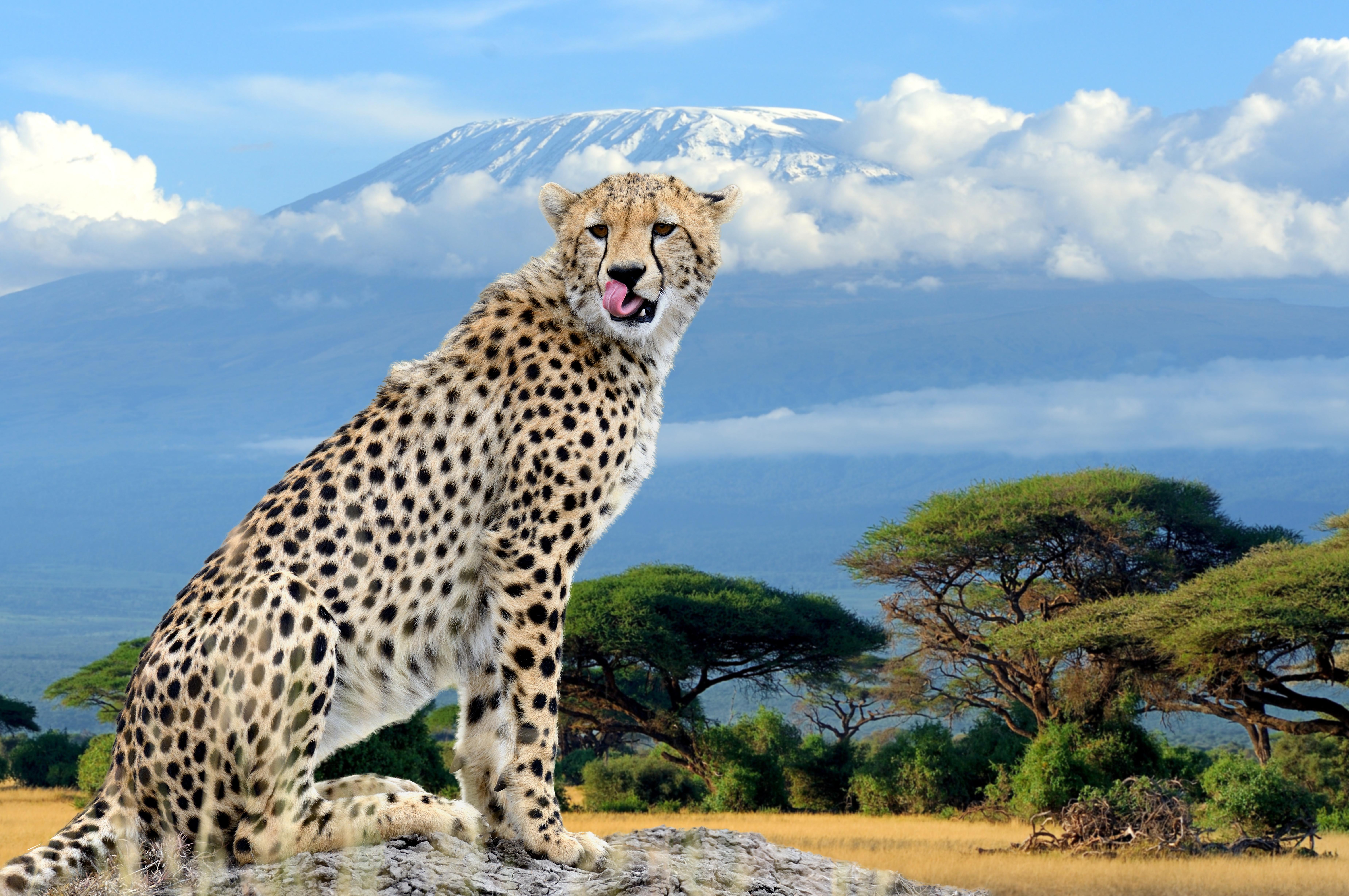 Kenia: 7 Dagen Across Kenia on Economy in groepsverband (lekker goedkoop!)